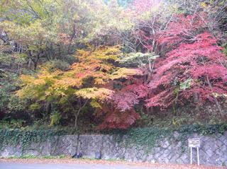 hyogo-shinrin09.JPG