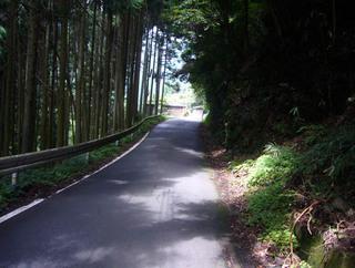 kyoto-kumo05.JPG