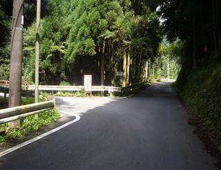 kyoto-kumo07.JPG
